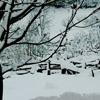 el jardin con nieve